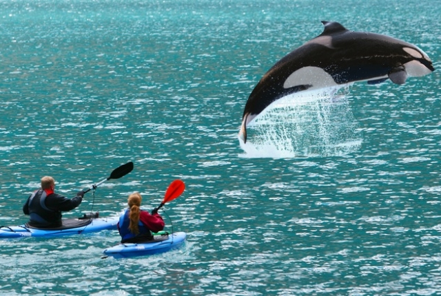 Whale Watching And Kayaking