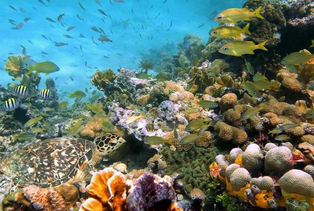 Top 10 Things To Do At Bora Bora
