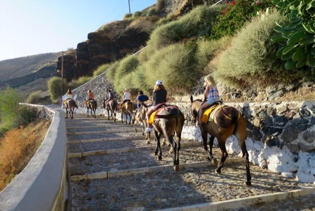 Go For A Donkey Ride In Fira
