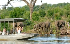 Destinations For Animal Lovers In Africa