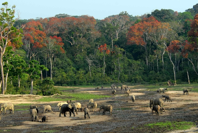 10 Places To Visit In Central African Republic Traveltourxp Com