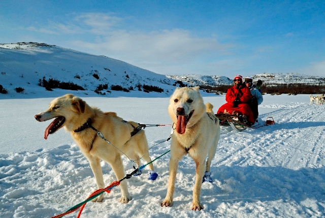 Visiting Finnmark For Sled Rides And Safaris