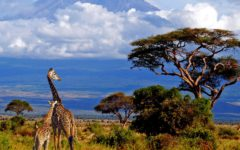 Attractions Of Tanzania For Visitors