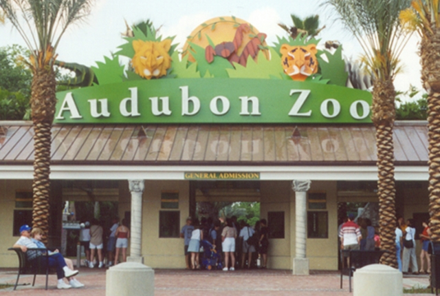 Observe the Komodo Dragon in the Audobon Zoo