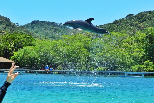 Play With Dolphins In Roatan Institute Of Marine Science