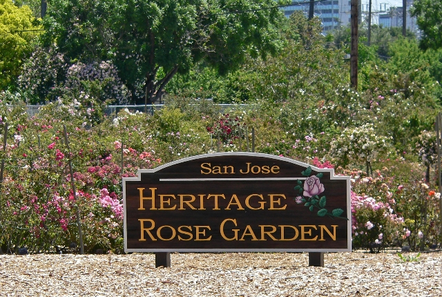 The Heritage Rose Garden