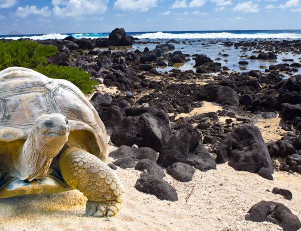 Tourist Attractions In Galapagos Islands