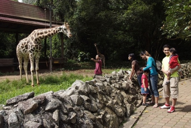 Explore The Wild At Melaka Zoo
