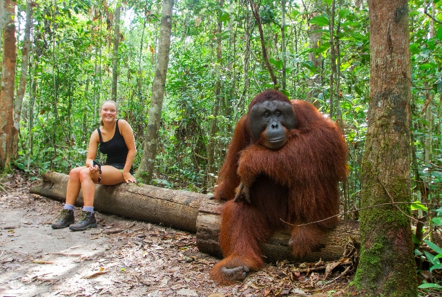 Get Friendly With The Orangutans