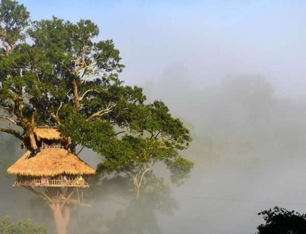 Tree House Hotels Around The World