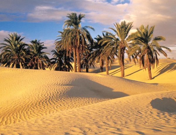 enrapturing-attractions-of-sahara-desert