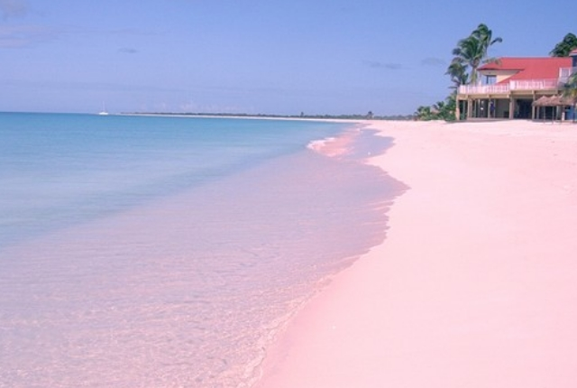 pink-beach-of-barbuda-caribbean-sea
