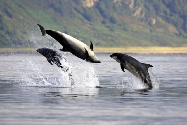 Scotland Dolphin Watching, UK