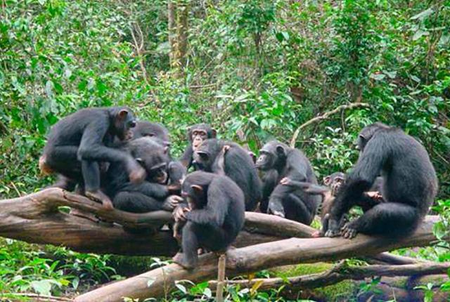 tacugama-chimpanzee-sanctuary