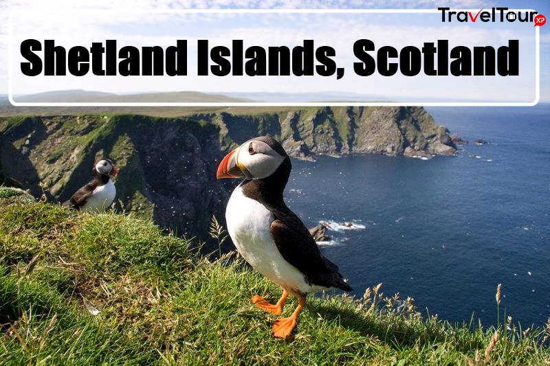 5-interesting-attractions-of-shetland-islands-scotland
