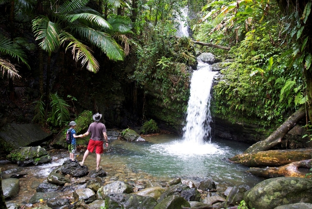 Hike In Enchanting Rainforests