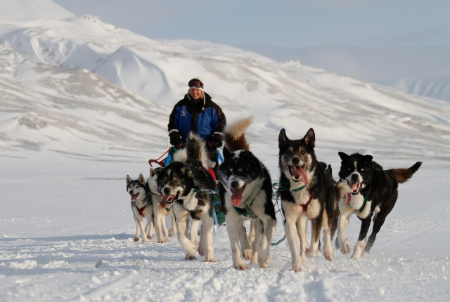 Enjoy The Ride In A Dog Sledge