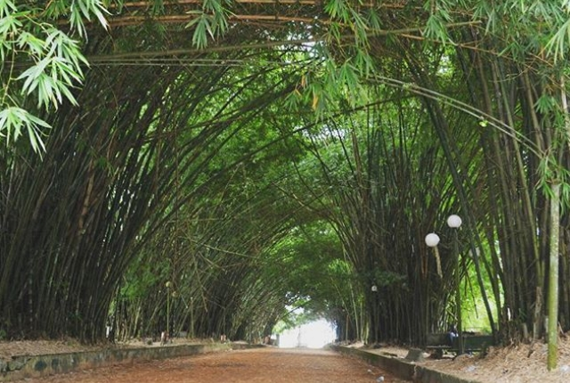 10 things to do in cote d ivoire for Bingerville jardin botanique