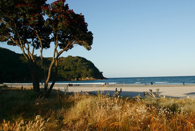 The Tranquil, Waihi Beach, Bay of Plenty