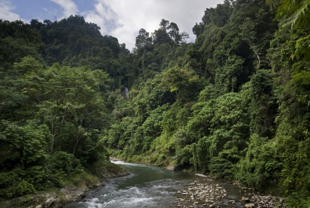 The Rainforest of Sumatra