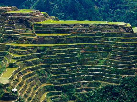 The Rice Terrace Located In Philippine Cordilleras