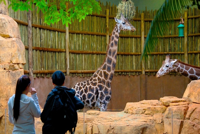 Watch Wildlife At Lincoln Park Zoo