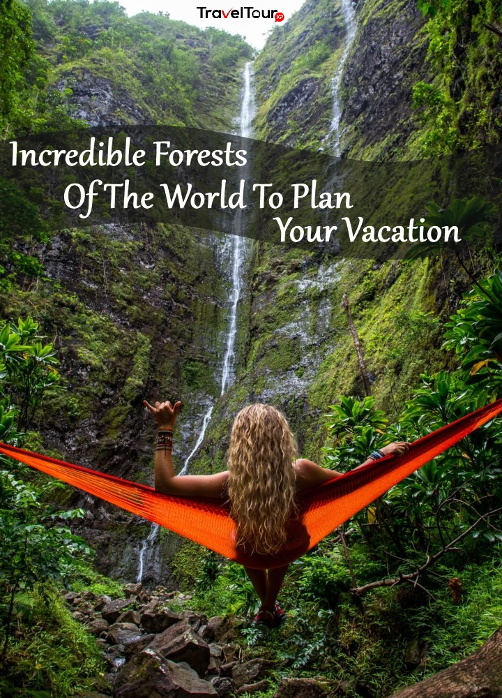 Forests Of The World To Plan Your Vacation