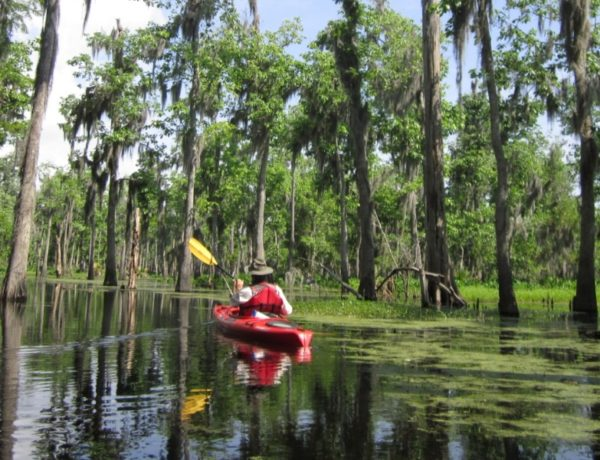 Things To Do In Louisiana