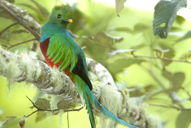 Look Out For Quetzal