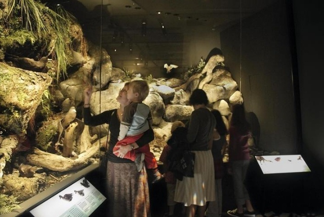 Explore The History And Culture Of The New Zealand At Te Papa