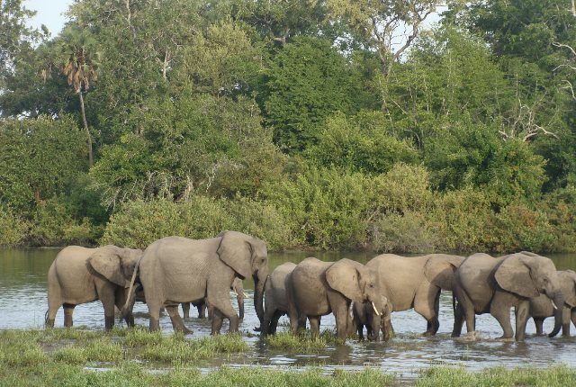 Selous Game Reserve: