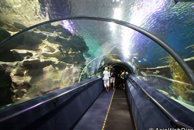 Dive Into The Depth In Aquaria KLCC